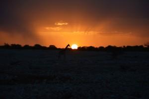 Päikeseloojang Etoshas