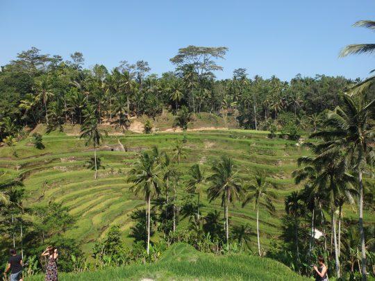 Bali6_jesper parve
