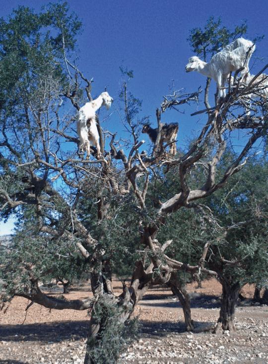 Maroko kitsed, Kristina Mänd, Estraveller 5/2014